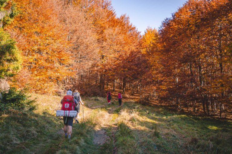 Grupa turystów idzie szlakiem w jesiennym lesie - Beskid Sądecki