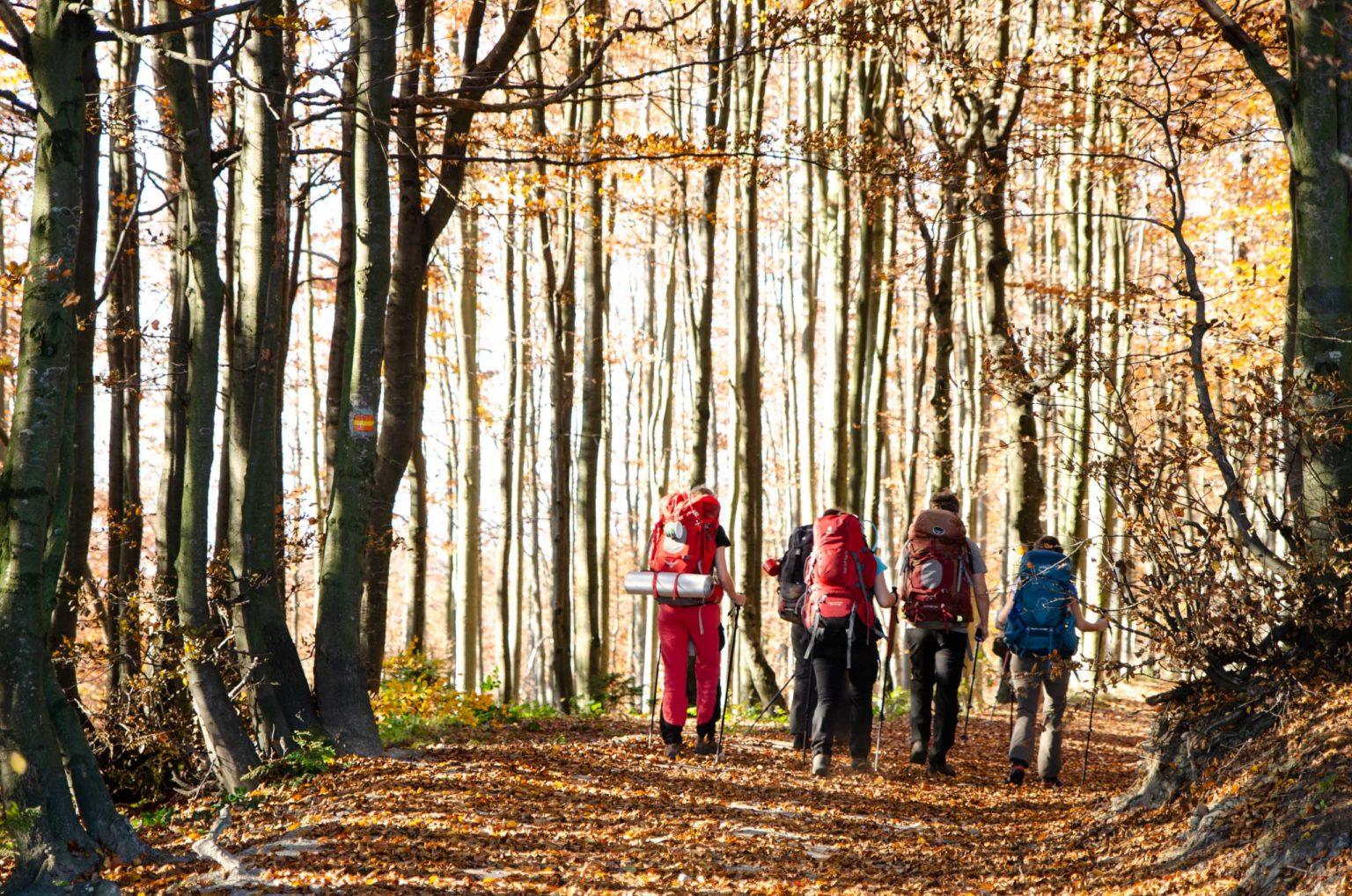 Grupa turystów idzie szlakiem z Hali Łabowskiej
