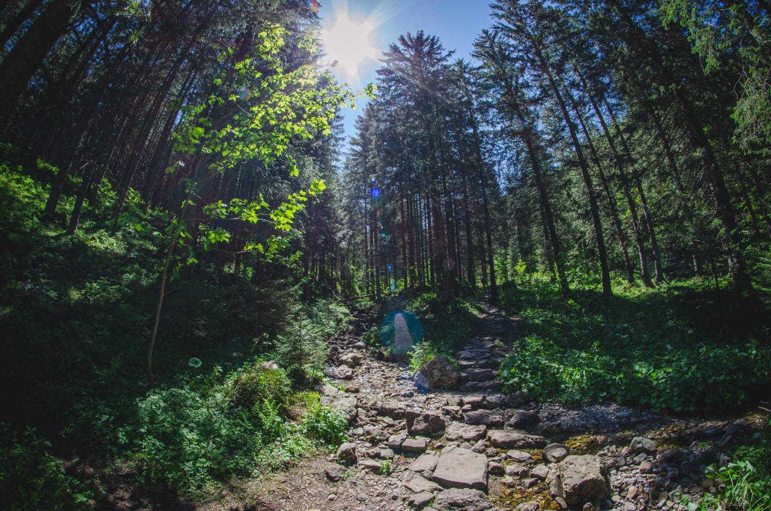 Szlak w lesie