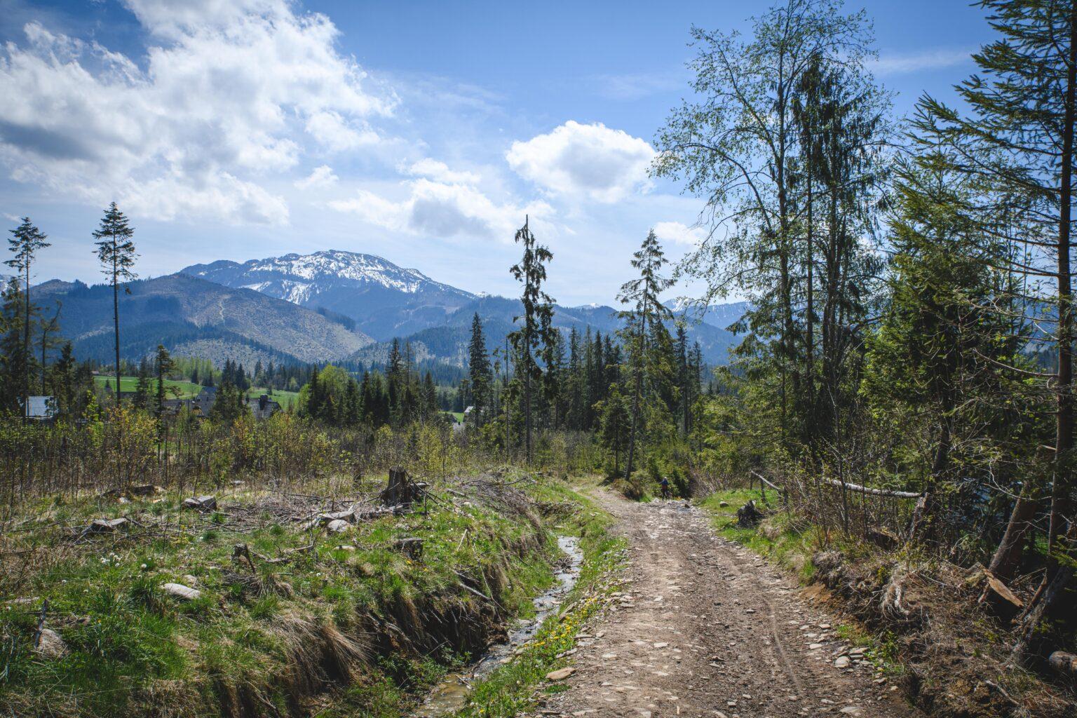 Leśna droga z Płazówki do Kościeliska
