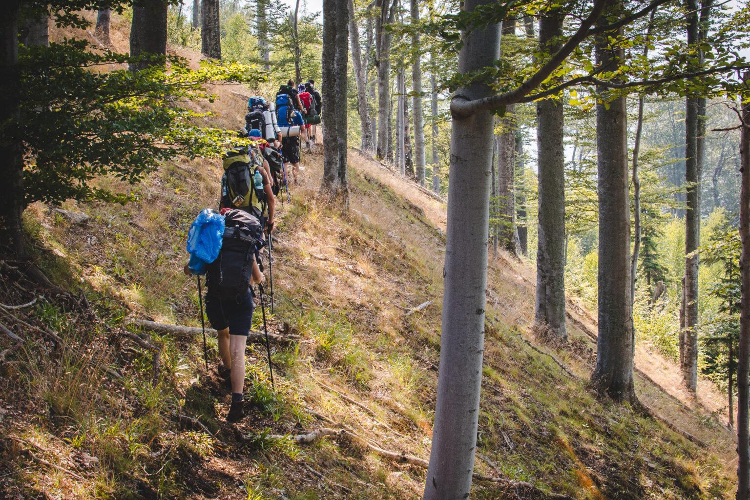 Turyści idą szlakiem w Karpatach w Rumunii