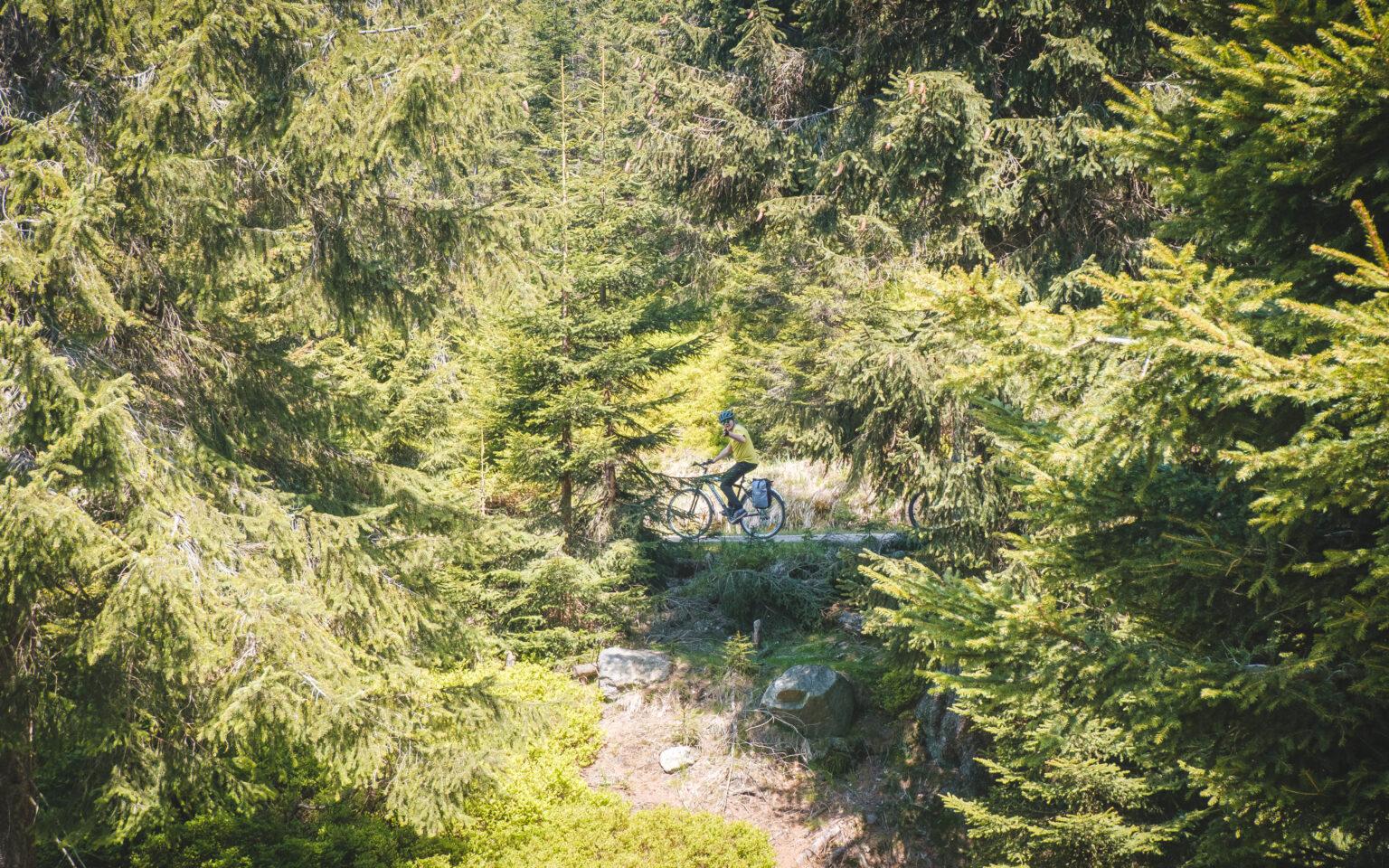 Przejazd po drodze między drzewami na rowerze w Górach Izerskich