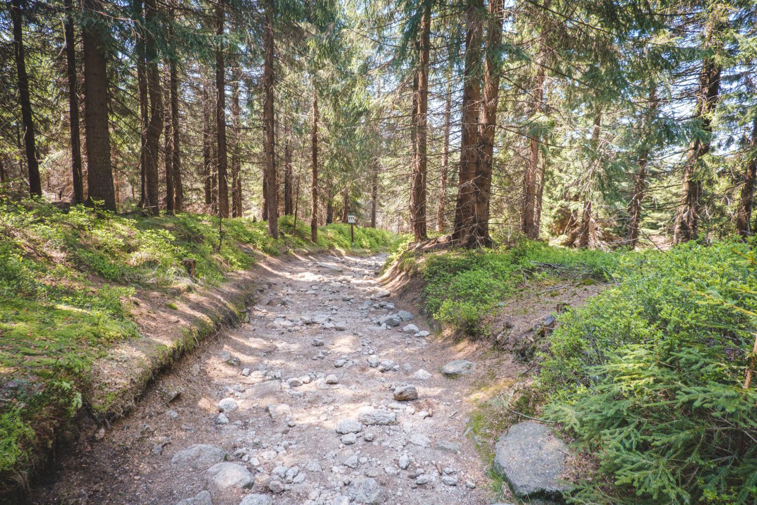 Kamienisty szlak rowerowy w Górach Izerskich
